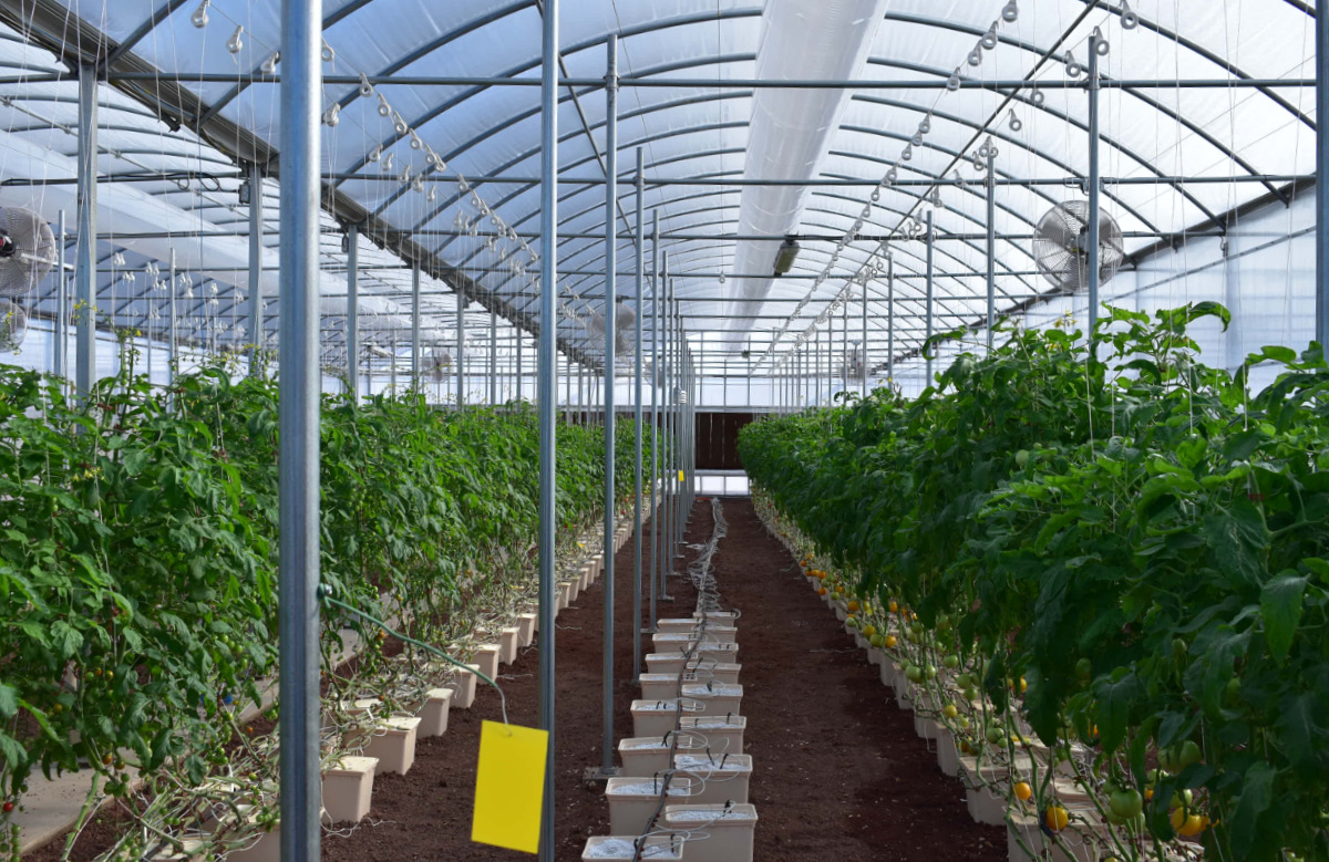 Considerations For Building The Best Hydroponic Controller Systems