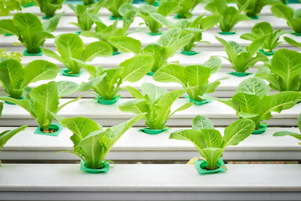 commercial hydroponics